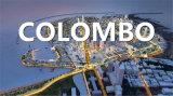 Ocean Shipping mer La logistique du fret de Qingdao à Colombo