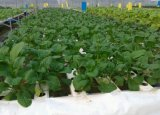 50g/H de beste Generator van het Ozon van de Aquicultuur voor de Behandeling van het Water van de Landbouw van Garnalen