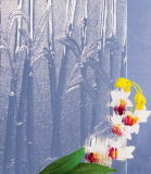 [4-8مّ] يلفّ /Textured /Figured /Patterned زجاج مع أسلوب خيزرانيّ