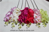 Qualitäts-Kunstseidephalaenopsis-Basisrecheneinheits-Orchidee-Motten-Orchideen für Hochzeit