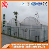 중국 농업 식물성 꽃 플레스틱 필름 온실