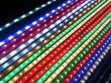 La vendita calda decora DC12V-5050RGB impermeabile IP65  LED  Striscia Light  Commercio all'ingrosso