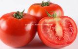 自然なトマトのエキスのリコピンの粉