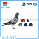 Gestão de pombos e Racing Anel Pombo/Tag de RFID