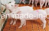 Consommation de porc en acier inoxydable tétines pour matériel agricole de cochon
