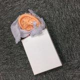 Modello dell'organo umano per lo studio del banco