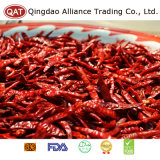 Desidratados Malagueta vermelha para a exportação