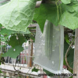 Sacchetto del seme, sacchetto della maglia dell'uccello dell'anti insetto del sacchetto netto della frutta del drago anti
