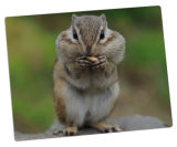 Qualität Online Foto Printing auf Aluminum Foto Panels für Cute Animals