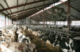 Het Voeden van de koe Arena, de Loods van het Vee (pch-15254)