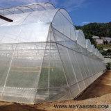 Red plástica 100% del acoplamiento de la red 50mesh del Anti-Insecto del HDPE de la Virgen
