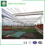 Casa verde vegetal de cristal de la agricultura multi del palmo