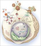 Interferon-Alpha 2b (API), biochemische Reagenzien, Ifn, Protein