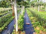 Il tessuto UV del coperchio al suolo di agricoltura di 3% ha superato la prova di PAHs