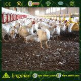 低価格の鋼鉄家禽はプレハブの鶏の小屋を収容する