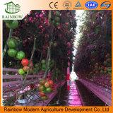 Опытные и элегантный Венло Тип стекла выбросов парниковых газов на томаты// огурца салат