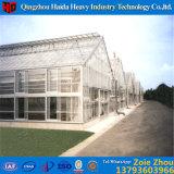 Коммерчески Hydroponic стеклянная зеленая дом для виноградины