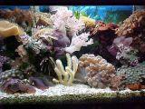 qualité de lumière d'aquarium de 120W DEL bonne (LP-AL-120W2D)