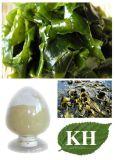 Extrait d'alga brun rendre la peau plus lisse et élastique