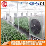 Chambre verte de bâti de film plastique végétal commercial de Graden