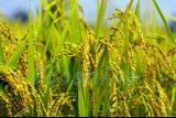 Ácido Humic líquido + de fertilizantes de NPK água dos fertilizantes NPK dos Macroelements - Fertilizer+Mob solúvel (BIOLITE)