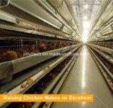 Высокое качество Автоматического уровня куриные каркас для больших повышение количества сельскохозяйственных