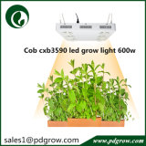 600W Plant LED Grow Lamp voor All Indoor Plant