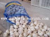 Alta calidad de ajo blanco fresco