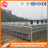 Serra di vetro del giardino della struttura d'acciaio