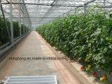 Agricluture 싼 다중 경간 유리제 정원 온실