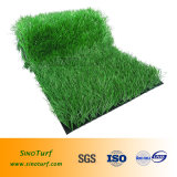 新しいデザイン高品質、競争価格のスポーツのための総合的な泥炭の草