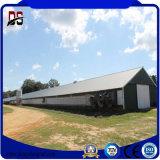 La granja avícola de la estructura de acero del bajo costo vertió para el pollo