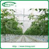 Invernadero de cristal hidropónico del Multi-Palmo para el tomate
