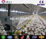 Stahlkonstruktion-Geflügel bringen unter,/Stahlkonstruktion-Huhn-Bauernhof mit Geräten (CH-44)