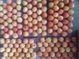 Nuovo galà rosso fresco Apple di formato 138-198 del raccolto