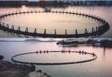 Le PEHD flottant de la cage de pêche de la pisciculture en cage Aquaculature Deepsea pour la mer