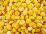 2500g en conserve Le maïs sucré avec le meilleur prix