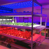 La maggior parte del Popuplar 12W LED idroponico coltiva la lampada chiara E27