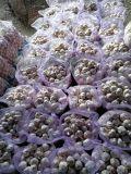 Свежие 4,5см над увеличенной опорой обычный белый чеснок по Йемену