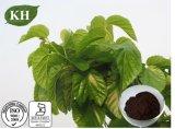 La lutte contre le diabète 1-Dnj 1 %, 2 %, 3 %, 5 %, 10 % Extrait de feuilles de mûrier
