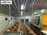 Équipement automatique personnalisé dans la maison de volaille avec installation