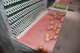 Il sistema della gabbia del pollo di strato per l'azienda avicola
