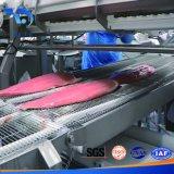 Correia transportadora modular para a carne