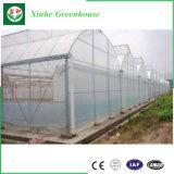 Singolo fornitore superiore della serra della pellicola di polietilene della portata della Cina