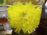 有機性巨大な金菊の花の茶(1つの花1個のコップ)