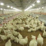 Matériel Breeding de volaille de production de grilleur d'étage
