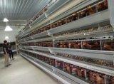 Chambre de poulet de couche de cloche de ferme avicole de modèle de construction de structure métallique de cloche à vendre