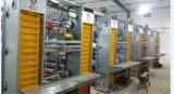Camera di pollo della struttura d'acciaio dell'Algeria il nuovo disegno e il Installe veloce e di basso costo