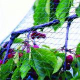 [هدب] شبكة بلاستيكيّة مضادّة عصفور تشبيك لأنّ دفيئة