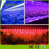 LED를 바꾸는 12W T8 빨갛 파랗 보라빛 색깔은 실내 플랜트를 위한 표시등 막대를 증가한다